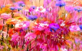 Обои линии, цветы, природа, рендеринг, краски, лепестки