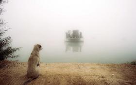 Обои река, собака, паром