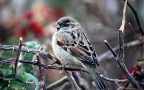 Обои Nature, bird, birds, morning, day, Macro, natural