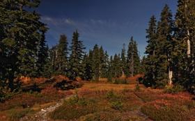 Обои поляна, лес, сосны
