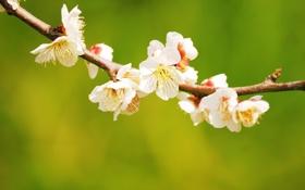 Обои макро, природа, фото, фон, обои, весна, весенние обои