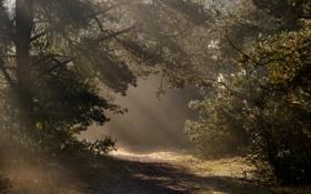 Картинка дорога, осень, свет, деревья, природа