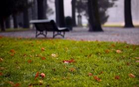 Картинка зелень, трава, листья, природа, парк, фото, фон