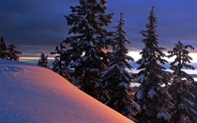 Картинка небо, снег, природа, ели