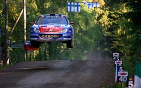 Картинка Авто, Синий, Лес, Спорт, Гонка, Citroen, WRC
