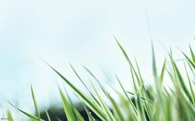 Обои небо, трава, макро
