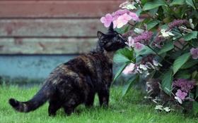 Обои кот, цветы, кошак, котяра