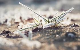 Обои иней, трава, макро, снег