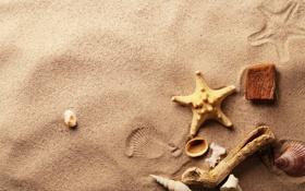 Картинка песок, следы, ракушки, морская звезда, деревяшки