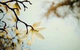 Обои белый, цветок, небо, макро, ветка, весна, лепестки
