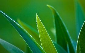 Картинка капли, листья, растение, вода, роса