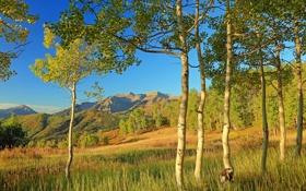 Обои осень, листья, деревья, горы, склон, Колорадо, США