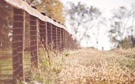 Обои ограда, трава, забор