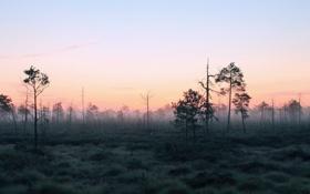 Картинка лес, пейзаж, природа, туман, утро