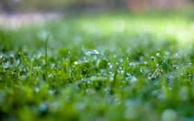 Обои трава, вода, капли, макро, природа, роса, боке