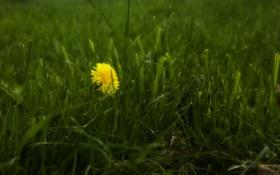 Обои трава, макро, цветы, природа, фото, обои