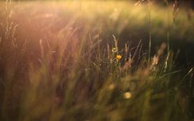 Обои трава, свет, цветочки