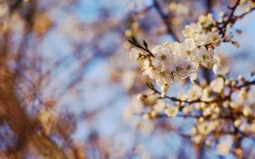 Обои листья, цветы, ветки, природа, весна, Spring wallpaper