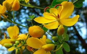 Картинка листья, обои, небо, лепестки, ветка, тычинки, цветы