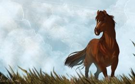 Обои небо, трава, животное, лошадь, арт, грива, хвост