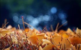 Картинка осень, листья, макро, синий, природа, фото, фон