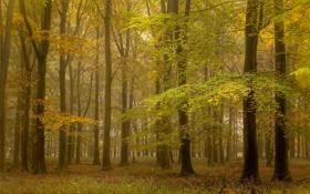 Обои осень, лес, природа