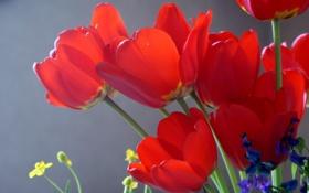 Обои тюльпаны, солнце, цветы