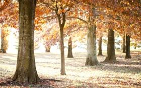 Обои листья, свет, деревья, природа