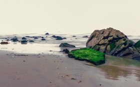 Картинка песок, море, пляж, камни, мох