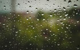 Картинка капли, макро, природа, дождь