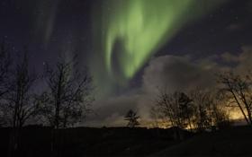 Обои небо, ночь, звезды, деревья, северное сияние