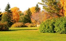 Картинка осень, трава, солнце, деревья, парк, поляна, кусты