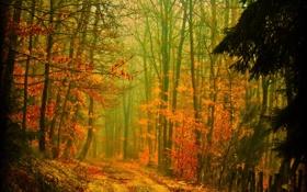 Обои дорога, осень, лес, деревья, природа, листва