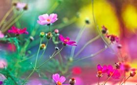 Обои Природа, Пейзаж, Цветы