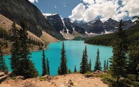 Обои лес, горы, озеро, нацыональный парк