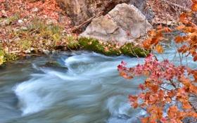 Обои осень, листья, ручей, камень, поток, ветка