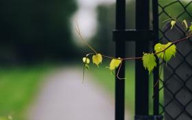 Картинка листья, забор, ветка, зеленые