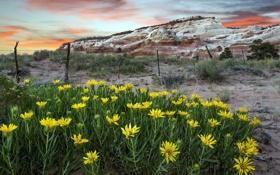 Картинка пейзаж, цветы, забор