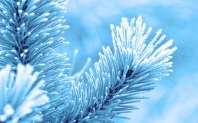 Обои холод, зима, макро, снег, фото, дерево, ель
