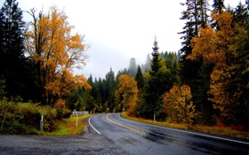 Обои Небо, Природа, Дорога, Туман, Осень, Деревья, Лес