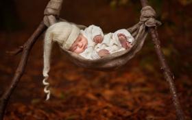 Обои сон, гамак, младенец