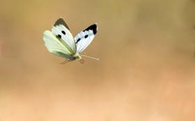 Картинка полет, фон, бабочка