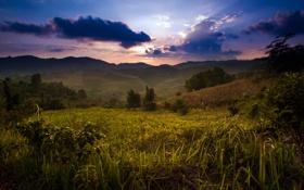 Обои небо, горы, тучи, растения, Thailand, Santikhiri
