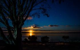 Картинка небо, звезды, закат, дерево, залив, сумерки