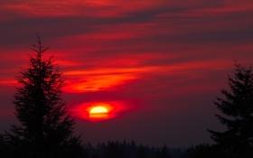 Обои небо, солнце, облака, деревья, закат, силуэт, зарево