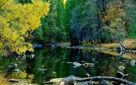 Обои природа, лес, река, Yosemite National Park