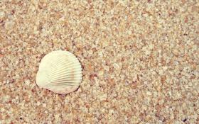 Картинка песок, макро, ракушка, macro, sand, 2560x1600, shell