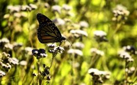 Обои поляна, бабочка, травка, день, солнце