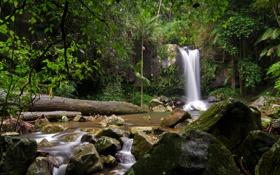 Обои лес, деревья, ручей, камни, скалы, листва, водопад
