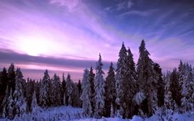 Обои природа, закат, зима